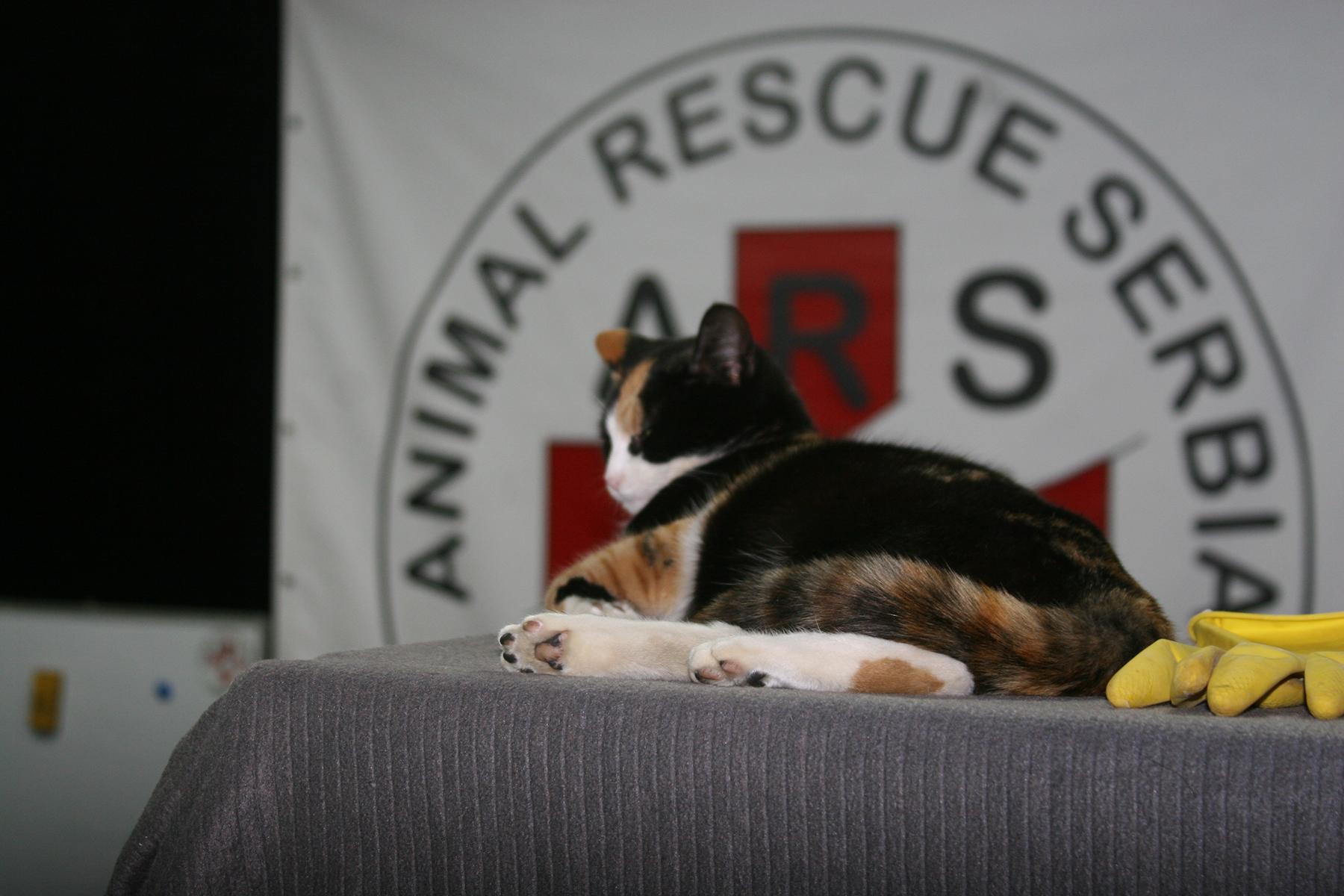 Animal Rescue Serbia